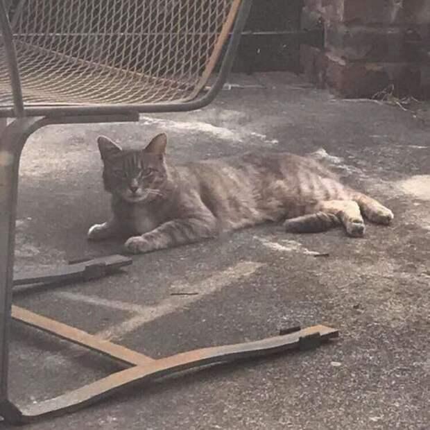 Скорбящая кошка вновь и вновь возвращается к месту проживания своей умершей подруги