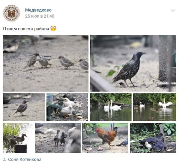 Фотоколлекция пернатых обителей Медведково появилась в сети