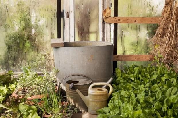Зачем нужны бочки с водой в теплице