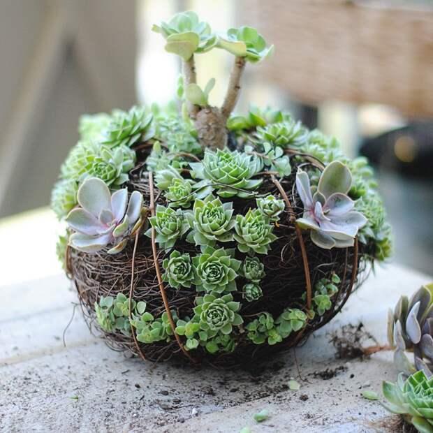 какие есть домашние растения