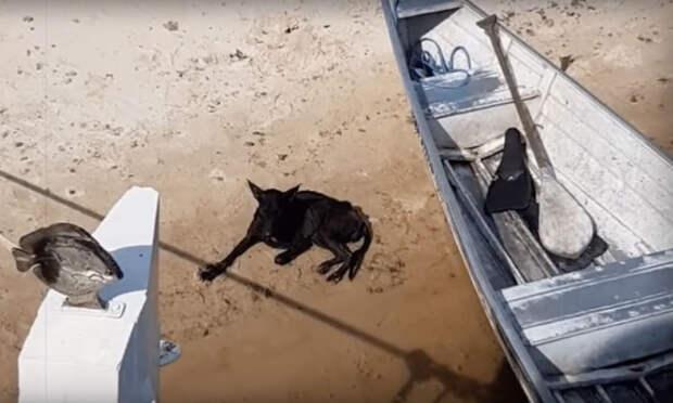 Турист проплывал мимо необитаемого острова когда случайно заметил на берегу собаку