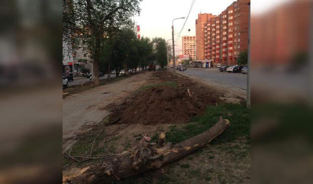 «Решили прикончить». ВУфе набульваре Ибрагимова проводят вырубку деревьев