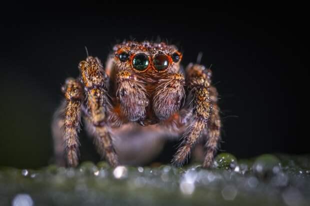 Под Ростовом обнаружили смертельно опасных пауков