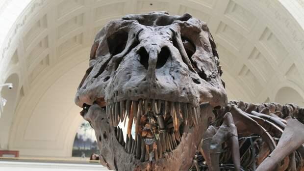 Ученые из Австралии исследовали скелет крупнейшего динозавра на Земле