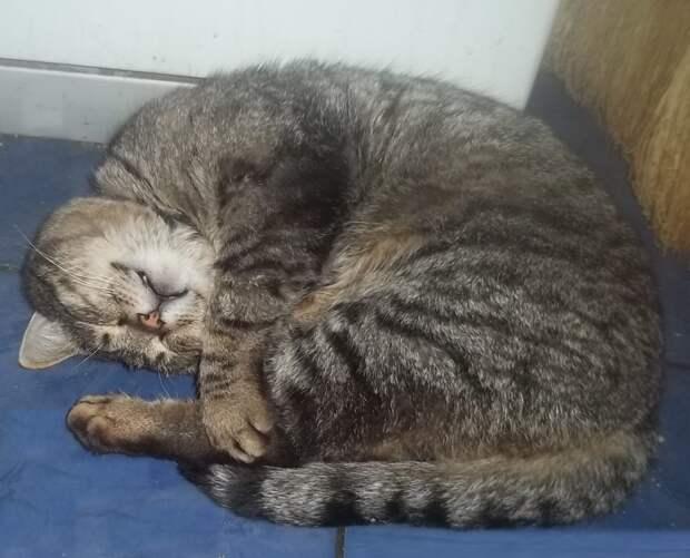 Весенняя история о кошке по имени Сергей, которая нашла на сеновале деньги