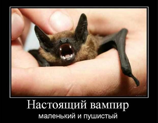 vampire5.jpg