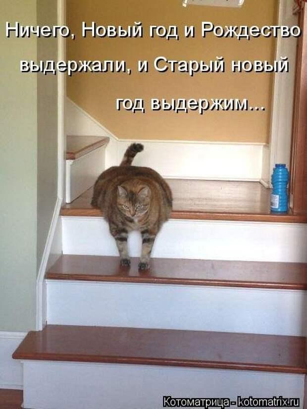 Свежая котоматрица для настроения (41 фото)