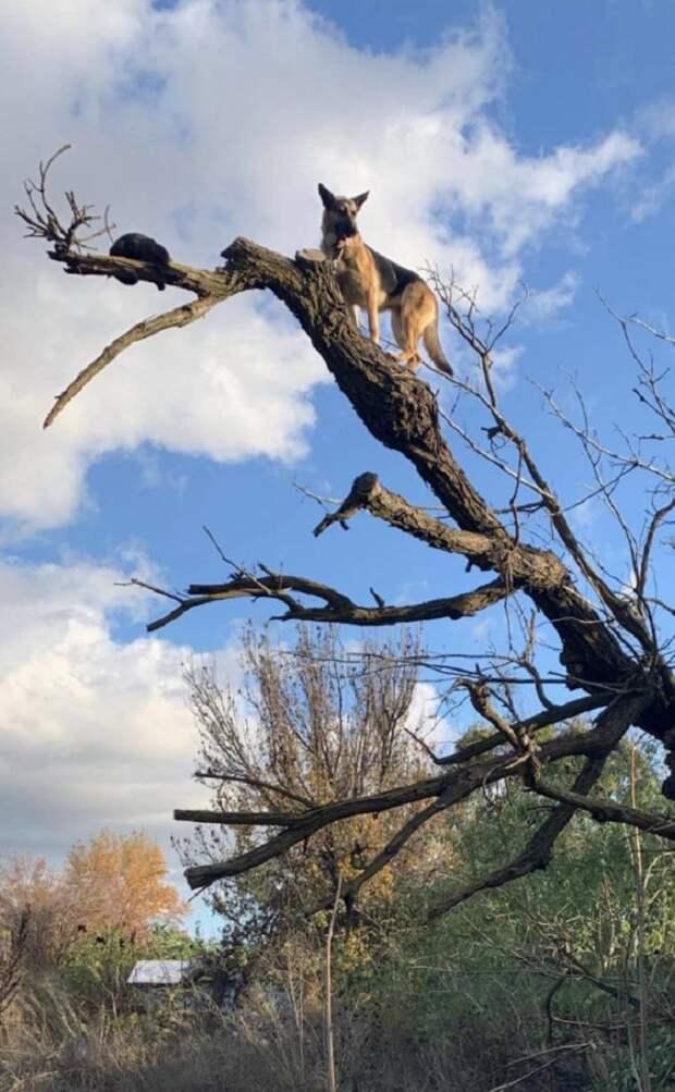 Кот с собакой на дереве