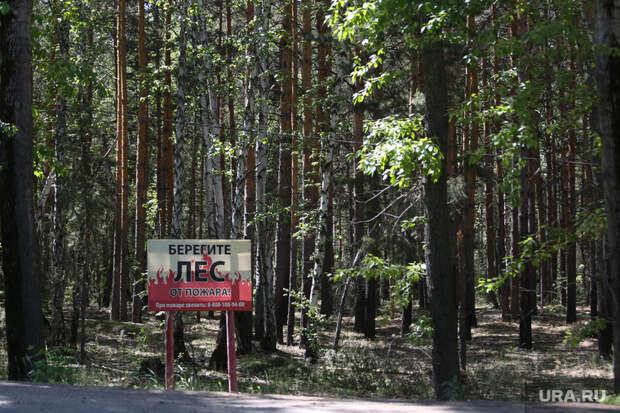 ВТюменской области продлили запрет напосещение лесов