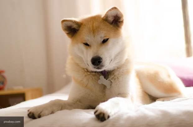 В Турции объяснили странные повадки домашних собак