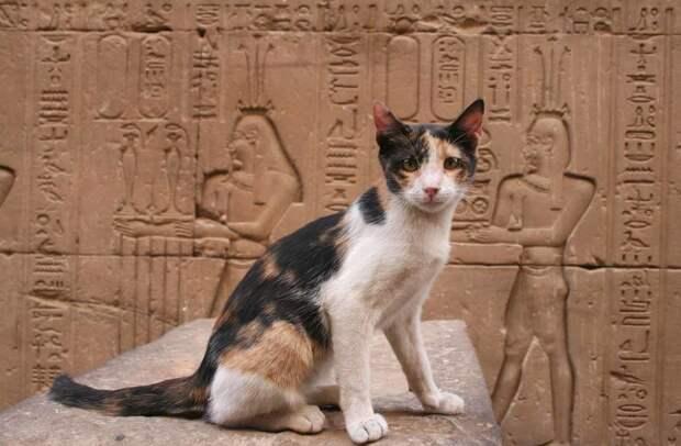 Почему в Древнем Египте так любили и почитали кошек?