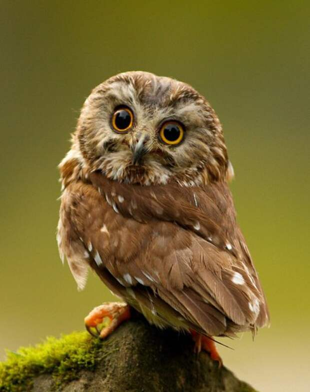Мудрейшая птица на свете – сова: Все слышит, но очень скупа на слова. Чем  больше услышит – тем ...