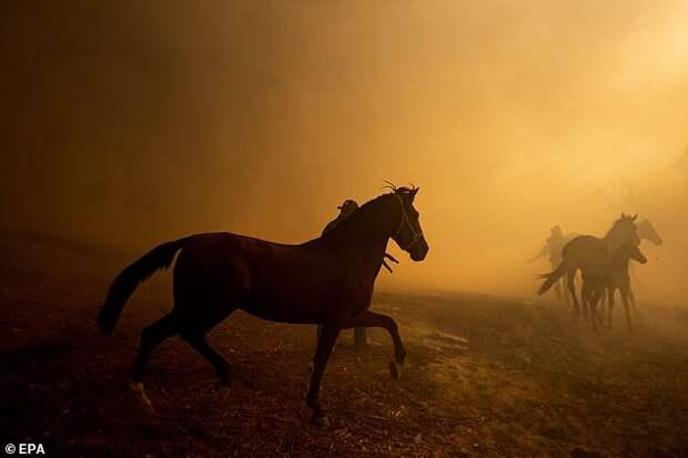 Лошадь кинулась в огонь, чтобы спасти жеребёнка и его мать