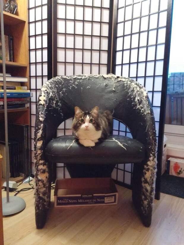 Кот и испорченный стул
