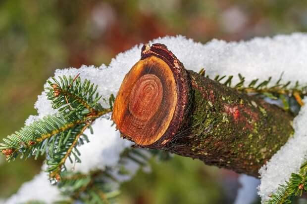 Мокрый снег ожидается в ряде российских регионов