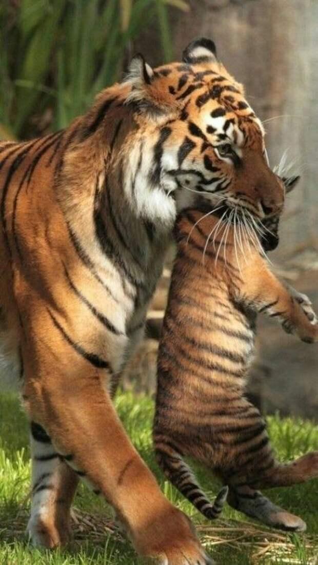 Забавные и веселые животные для настроения (12 фото)