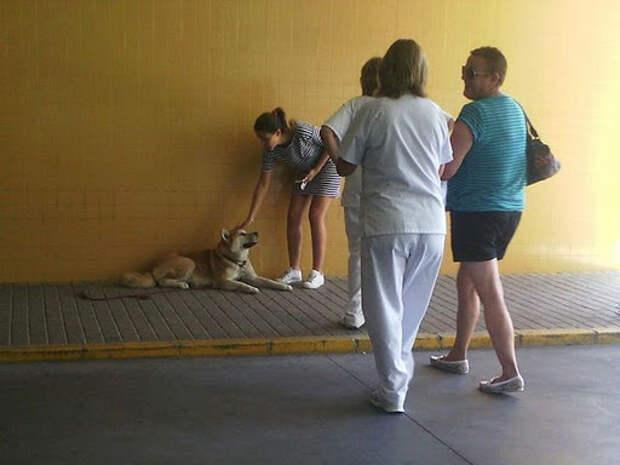 Собака преградила дорогу скорой, медбрат пытался ее прогнать, но собака все равно стояла на своем