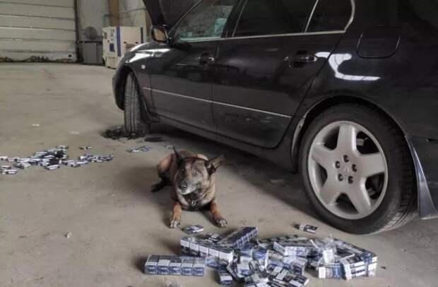 Служебная собака Нерон пресекла попытку контрабанды сигарет