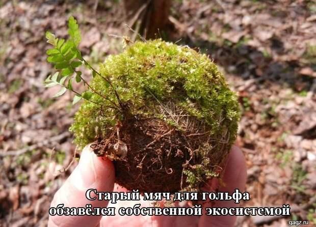 podborka_horoshego_nastroeniya_gagz_ru_001498