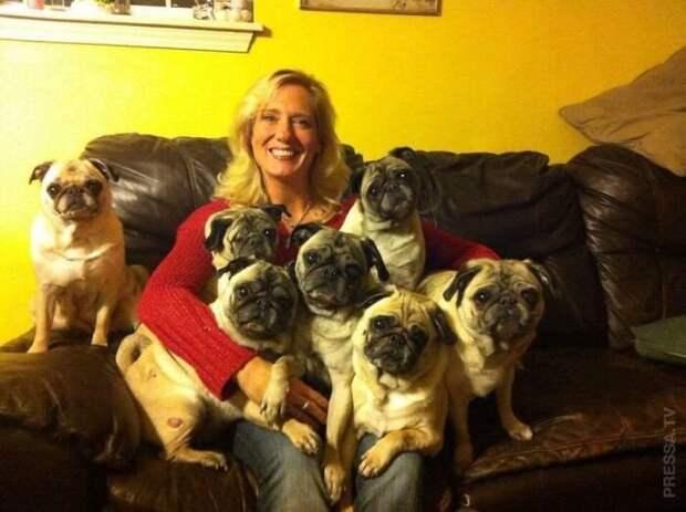 Семейные фотографии с собаками