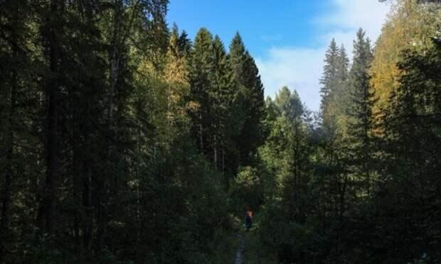 В Мирном спасатели вывели из леса мужчину, заблудившегося в лесу