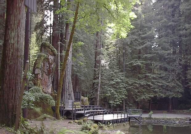 1. Богемская роща (Монте-Рио, Калифорния) вокруг света, интересное, факты