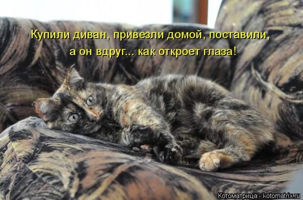 Котоматрица: Купили диван, привезли домой, поставили, а он вдруг... как откроет глаза!