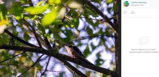 Фото дня: утро в Алешкинском лесу