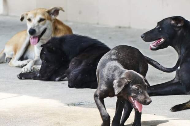 Как защититься от нападения бродячей собаки
