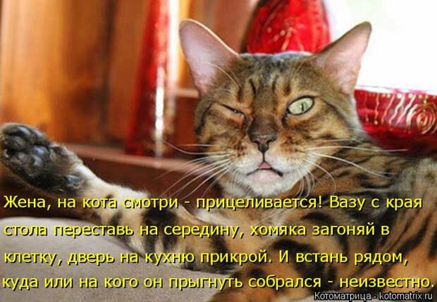 kotomatritsa_i (2) (700x485, 406Kb)