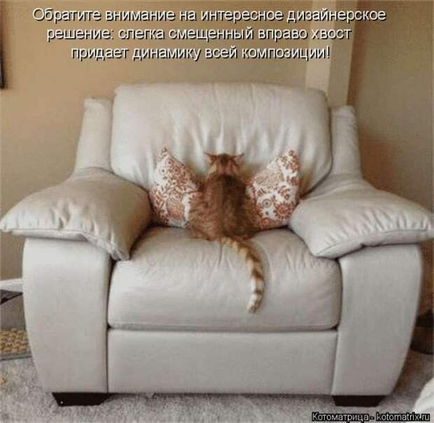 Свежая котоматрица для хорошего настроения (28 фото)
