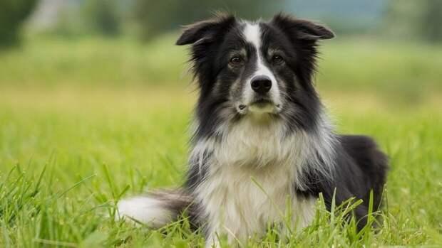 Малолетний живодер размахивал собакой во время прогулки в Петербурге