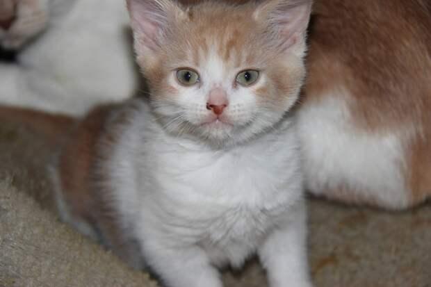 Кошечке надоело, что ее постоянно возвращают в приют и она взяла ситуацию в свои лапки