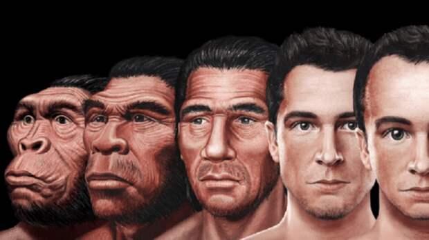 Куда эволюционирует наше лицо?