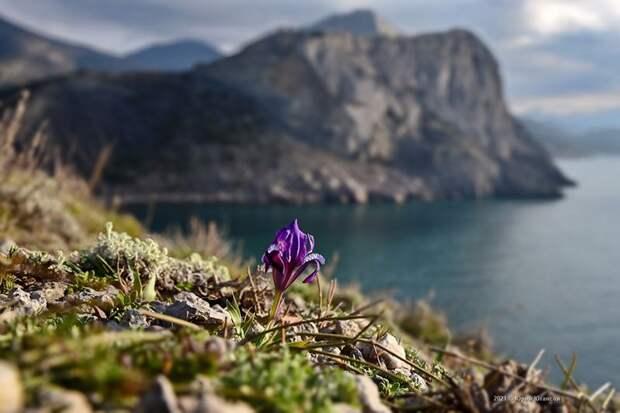 Прогноз погоды на 7 мая: в Севастополе и Крыму тепло и сухо
