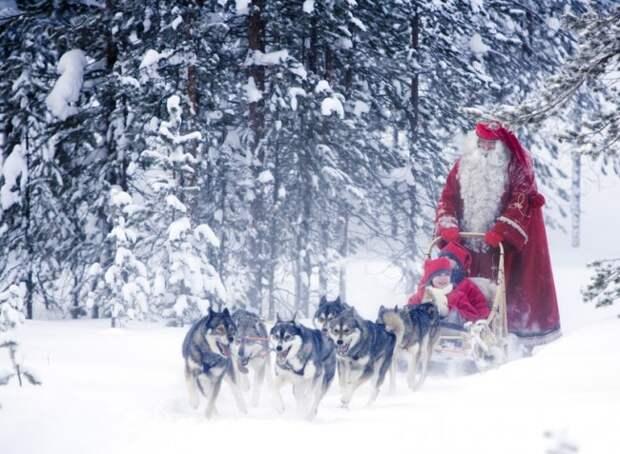 На собаках весело, деревня, интересно, новый год, село, юмор