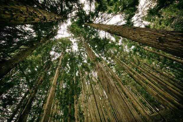 Более 70 человек заблудились в лесах Удмуртии с апреля
