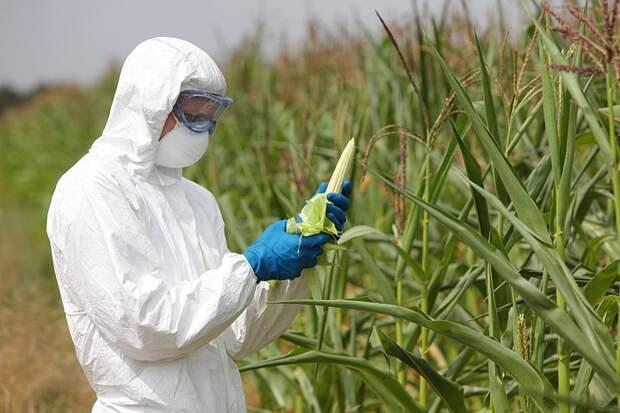 Спасти человечество от голода можно и без ГМО