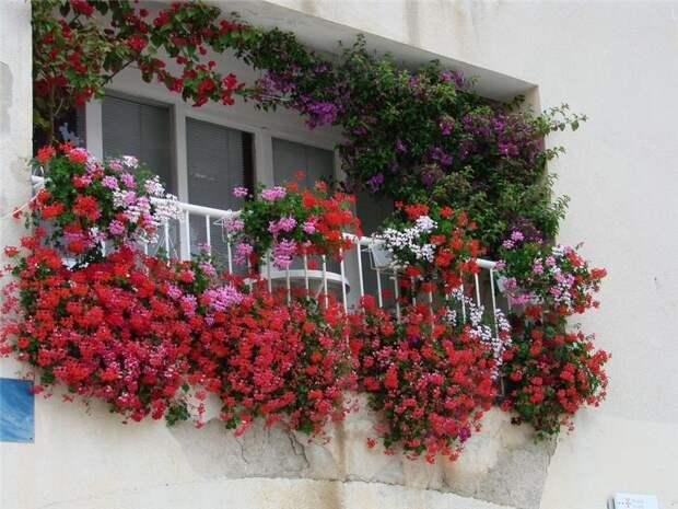 Озеленение балкона, лоджии, террасы. Основы и принципы