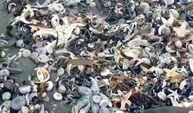 Камчатское кладбище морских животных