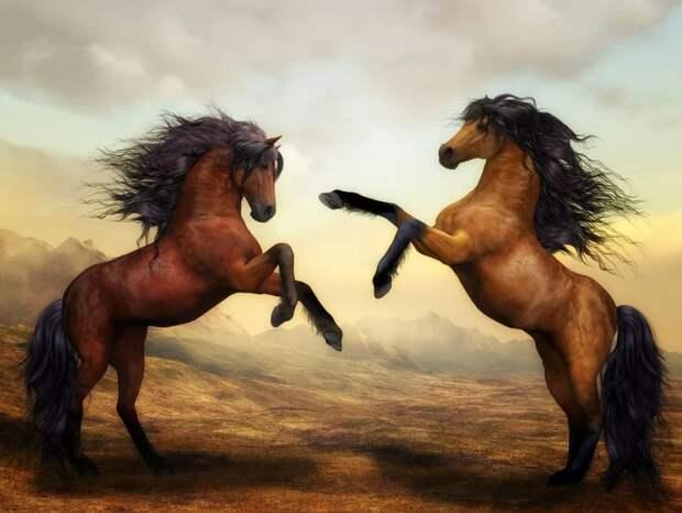 Музей коневодства в Тимирязевском можно посетить бесплатно