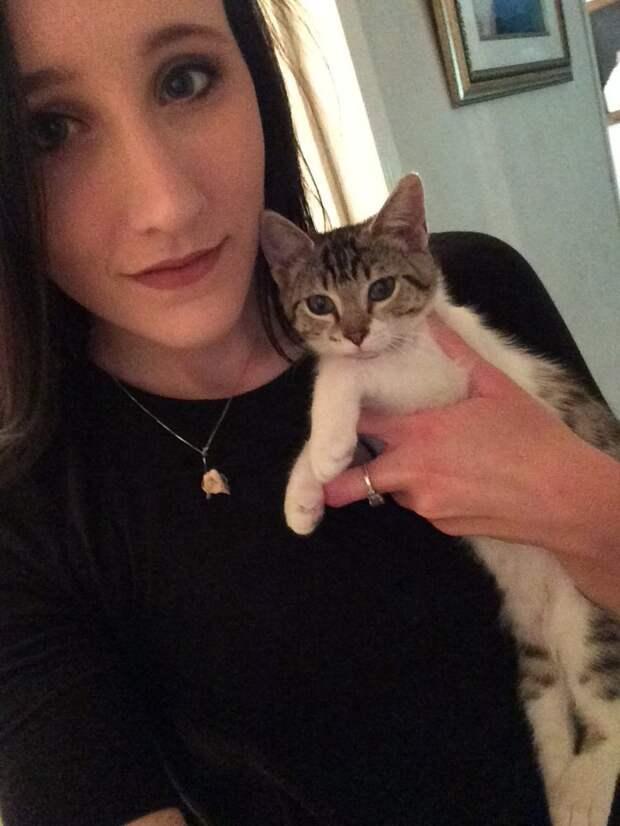 Ревнивый кот испортил фото с новым питомцем домашние животные, животные, забавно, кот, питомцы, прикол, ревность
