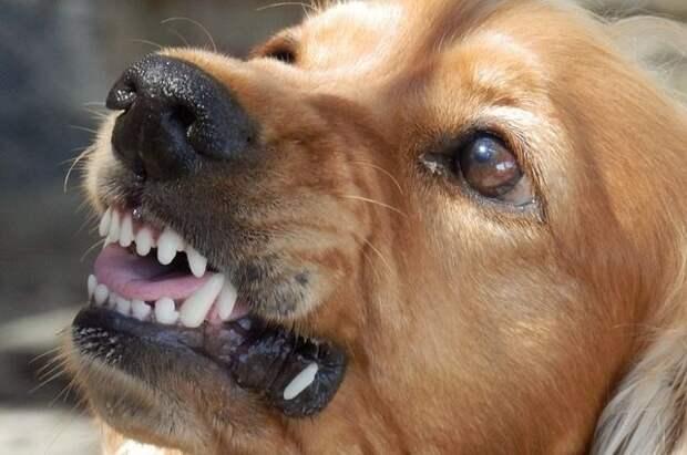 В Приморье завели уголовное дело после нападения собак на девочку-подростка