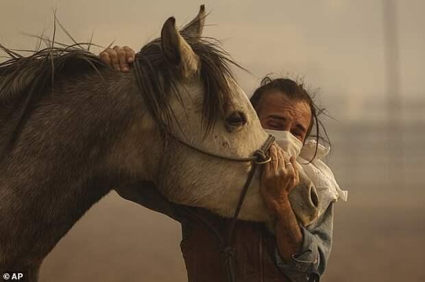 Фабио Лосурдо успокаивает свою лошадь Смарти в Сими-Вэлли, штат Калифорния