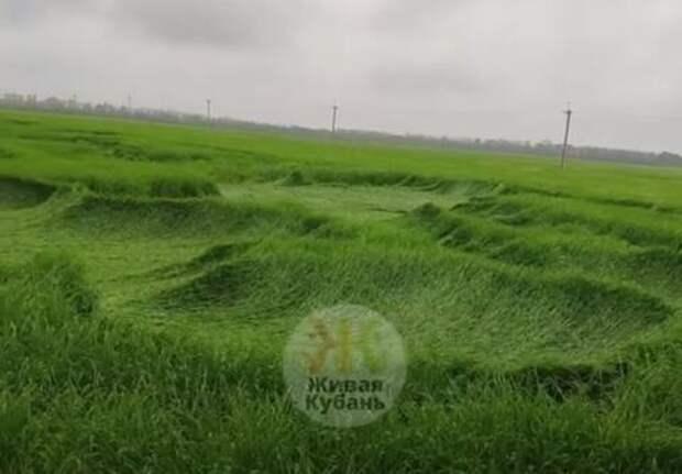 В Краснодарском крае обнаружили загадочные круги на полях ВИДЕО