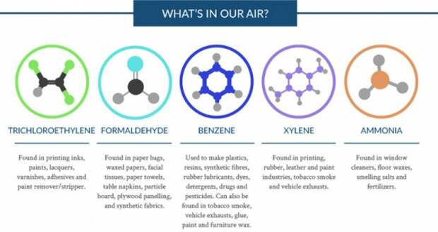 растения для очистки воздуха: Блог им. Asya: Сознательное потребление