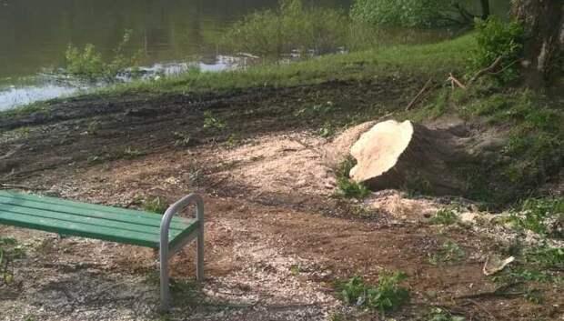 Упавшее дерево убрали с пляжа у парка Талалихина в Подольске
