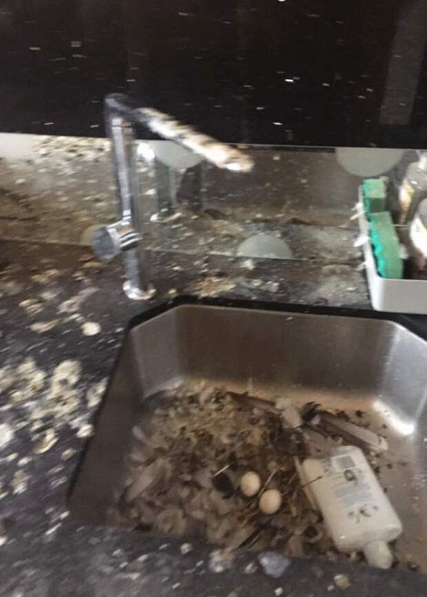 Птичий сюрприз: голуби полностью загадили комнату студента, который вмарте забыл закрыть окно
