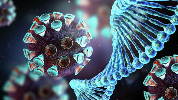 Иммунитет человека помогает коронавирусу заражать новые клетки