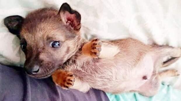 Этого крохотного щенка, малолетние живодеры, почти забили камнями